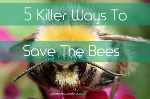 5 Killer Ways to Save The Bees