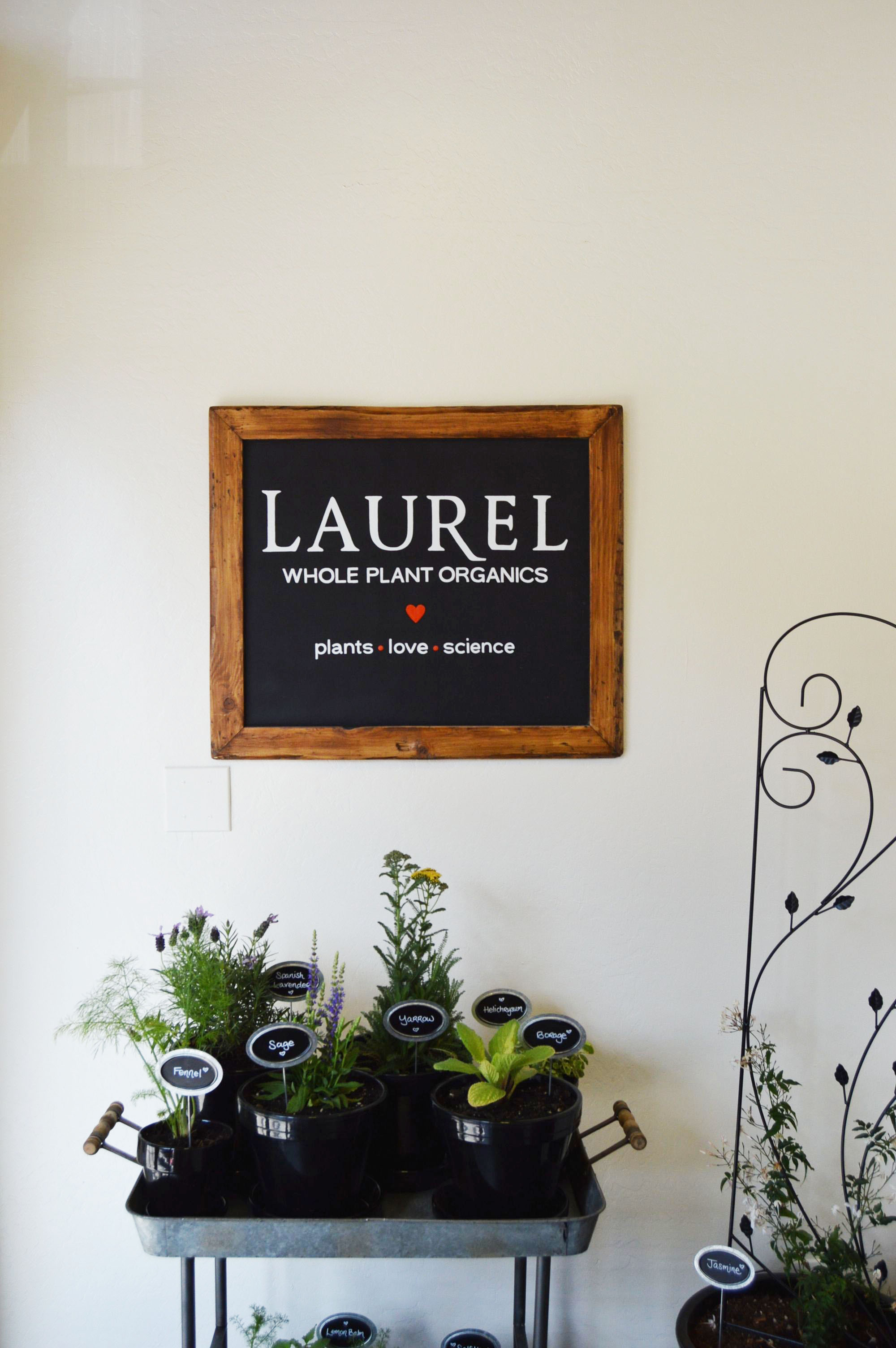 The Laurel Skin Studio Grand Opening