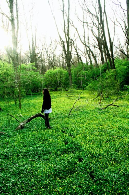 Is Forest Bathing The New Therapy?
